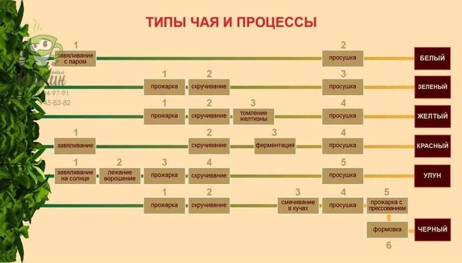Как организовать производство чая