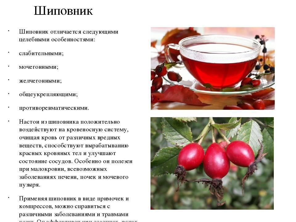Полезные свойства напитка израстения иван-чай имедицинские противопоказания кего использованию