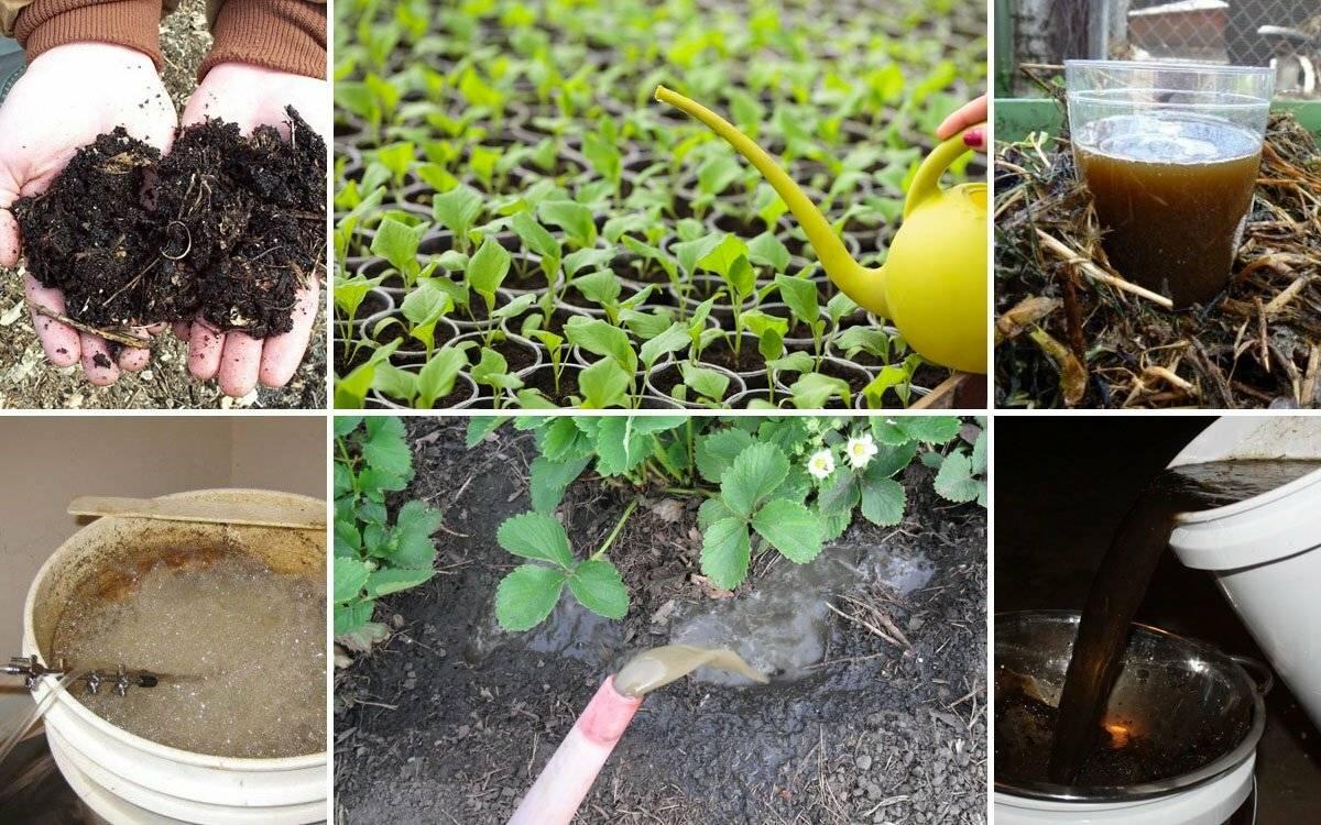 Способы применения удобрения из чайной заварки