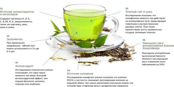 Зеленый чай: польза и вред зеленого чая. кому противопоказан?