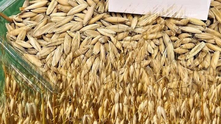 Отвар овса – 4 рецепта приготовления и все секреты применения