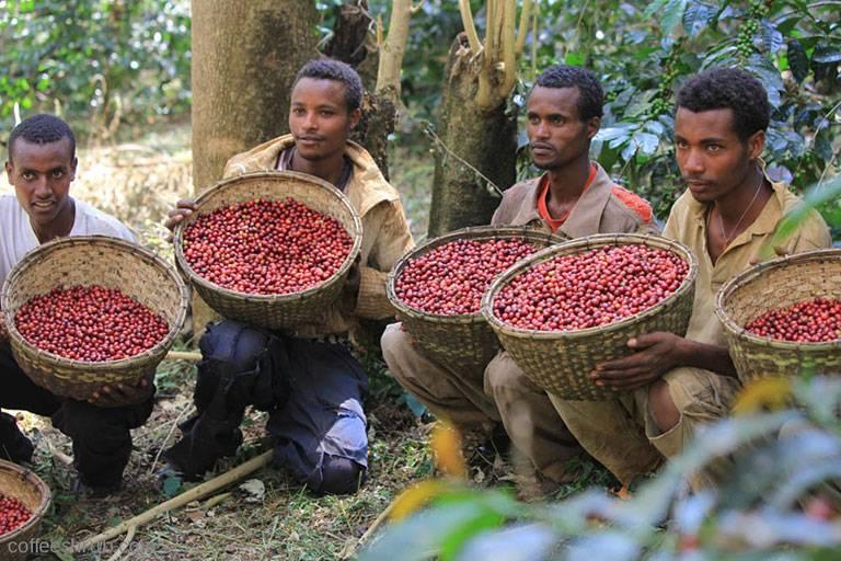 В чем ценность кенийского кофе – его вкус, аромат, виды