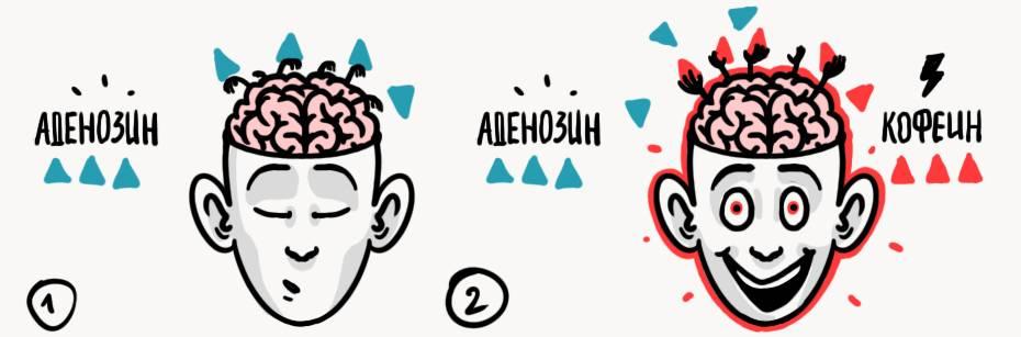 6 напитков для для мозга, стимулирующих его работу: какие чаи и соки полезны для памяти и внмания?