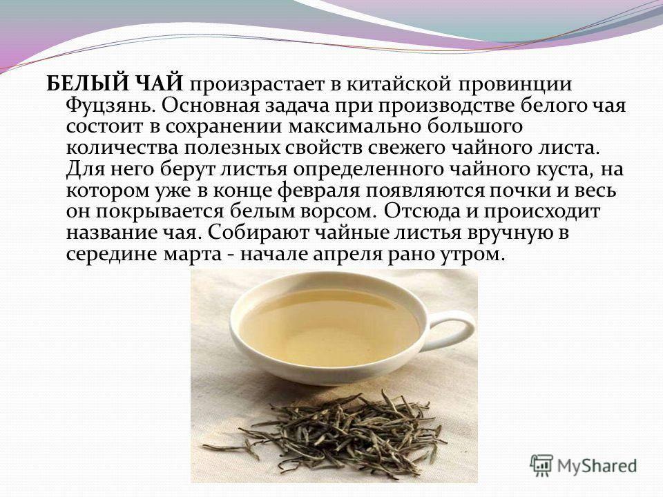 Виды чая: классификация и тонкости заваривания