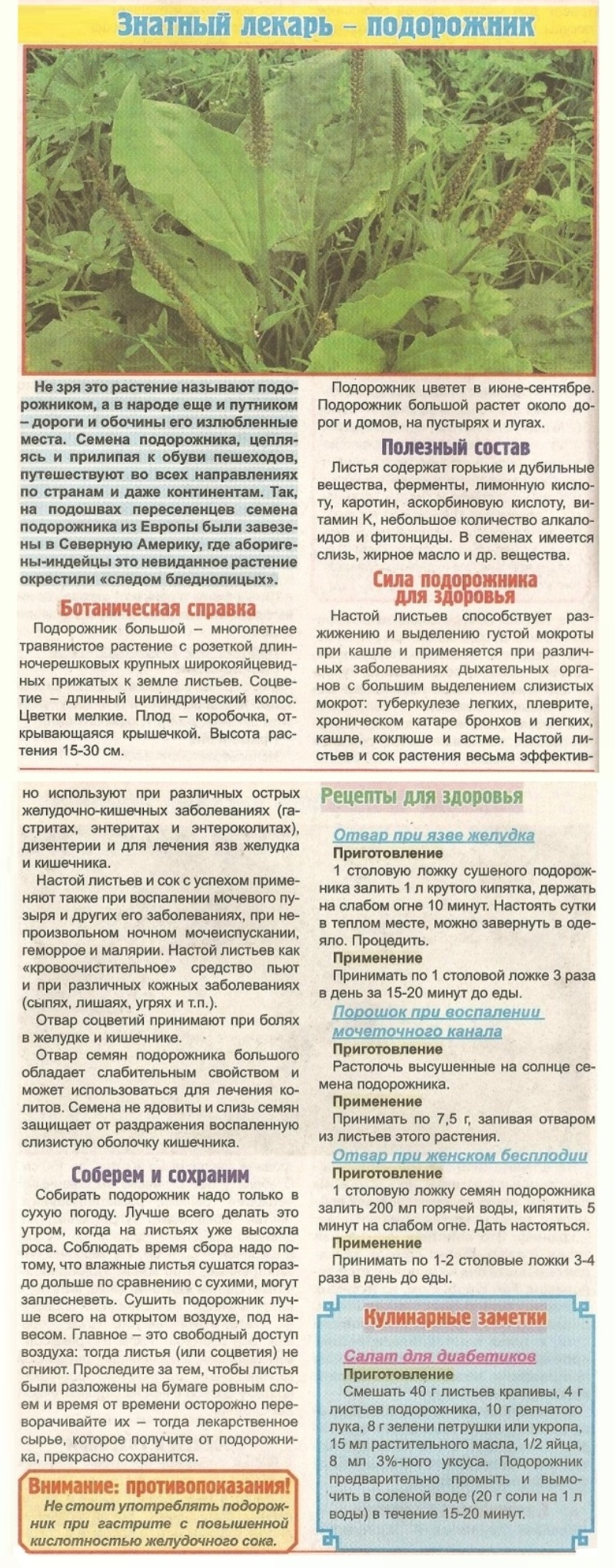 Как сушить календулу: правильная сушка в домашних условиях - засушим.ru