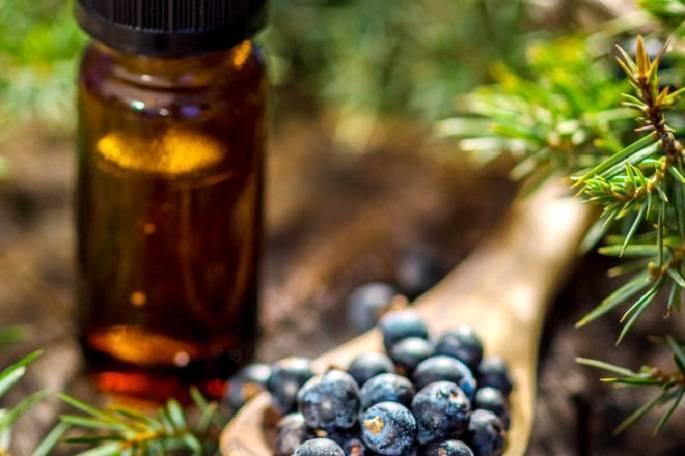 Рецепты чая из можжевельника и его свойства