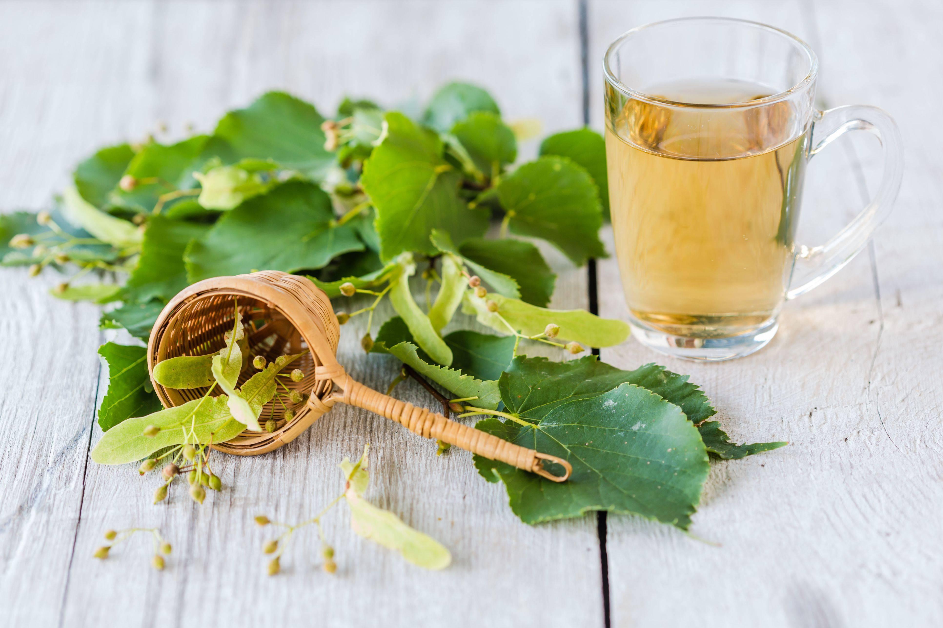 Липовый чай: польза и вред для организма | польза и вред