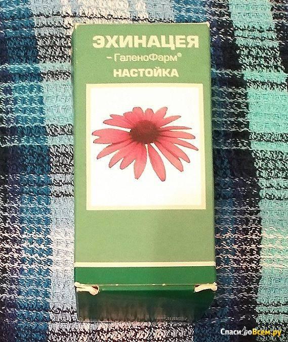 Как приготовить чай из эхинацеи