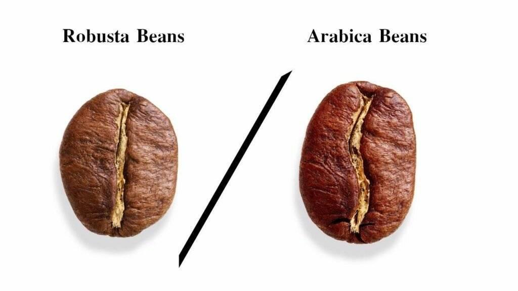 Робуста и арабика различия: по внешнему виду, вкусу, крепости, что лучше