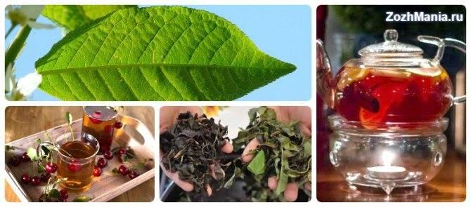 Польза и вред чая из листьев вишни | польза и вред