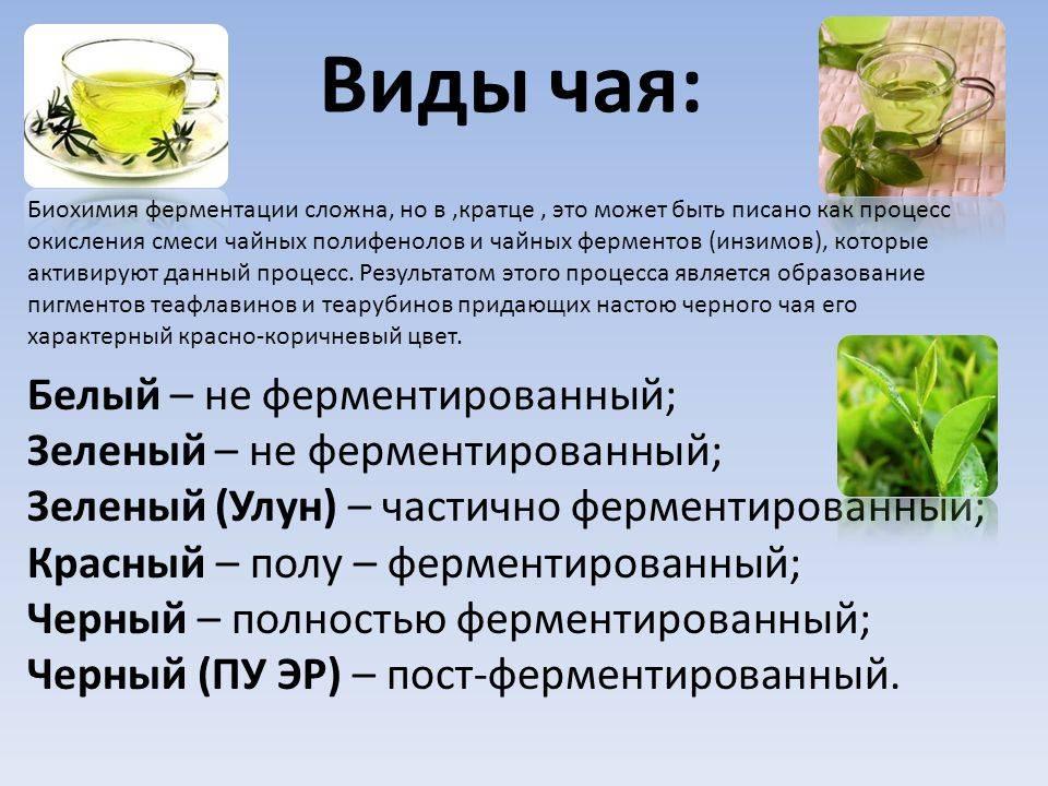 Виды чая: в чем отличия
