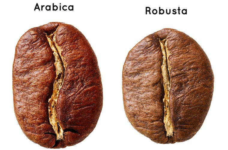 Арабика или робуста – что лучше?