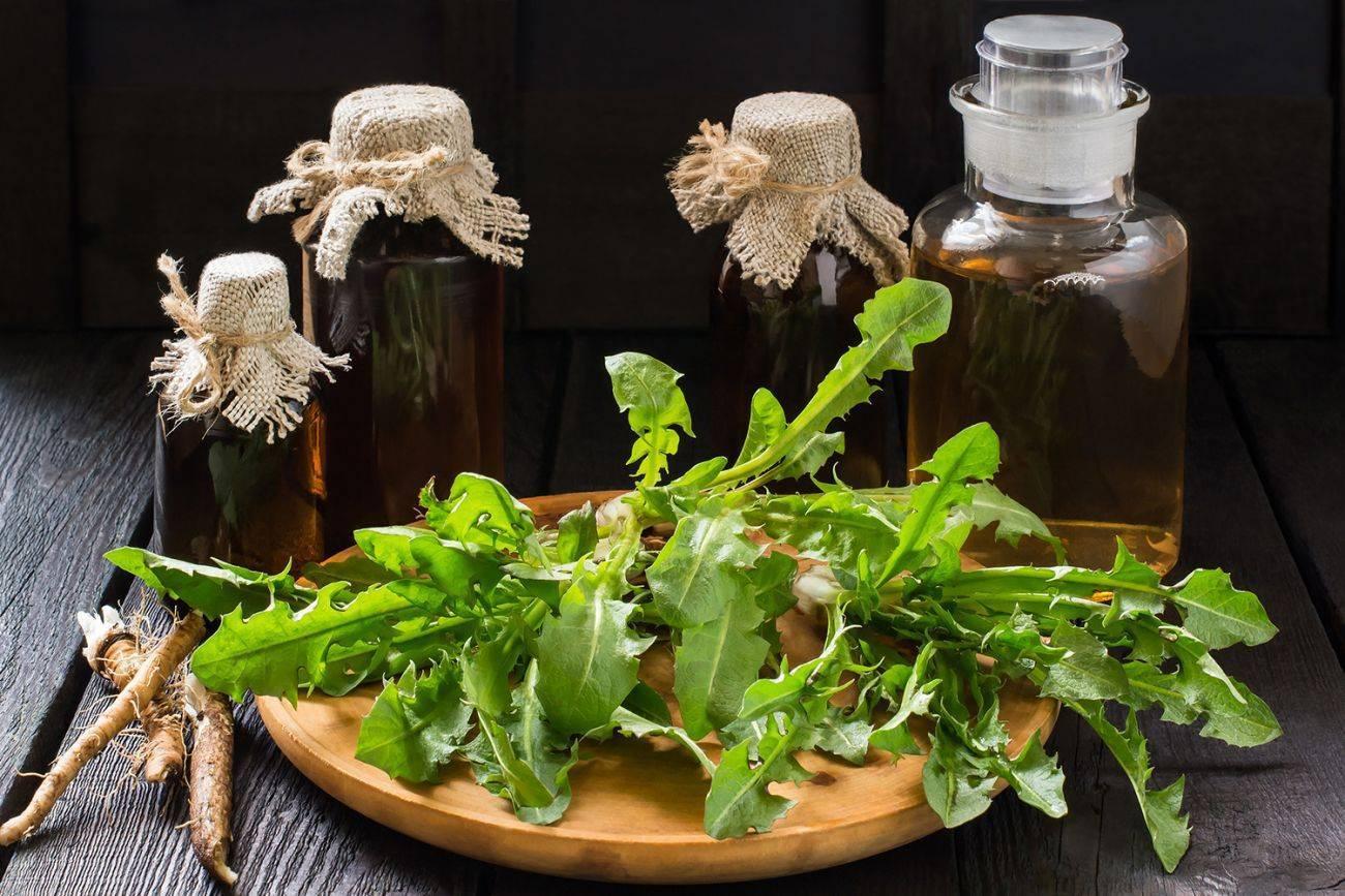 Когда собирать и как сушить корни одуванчика, цветы и листья растения