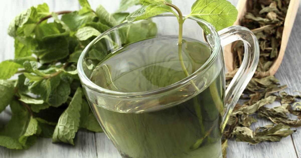 Сок из кабачка: польза и вред, лечебные свойства