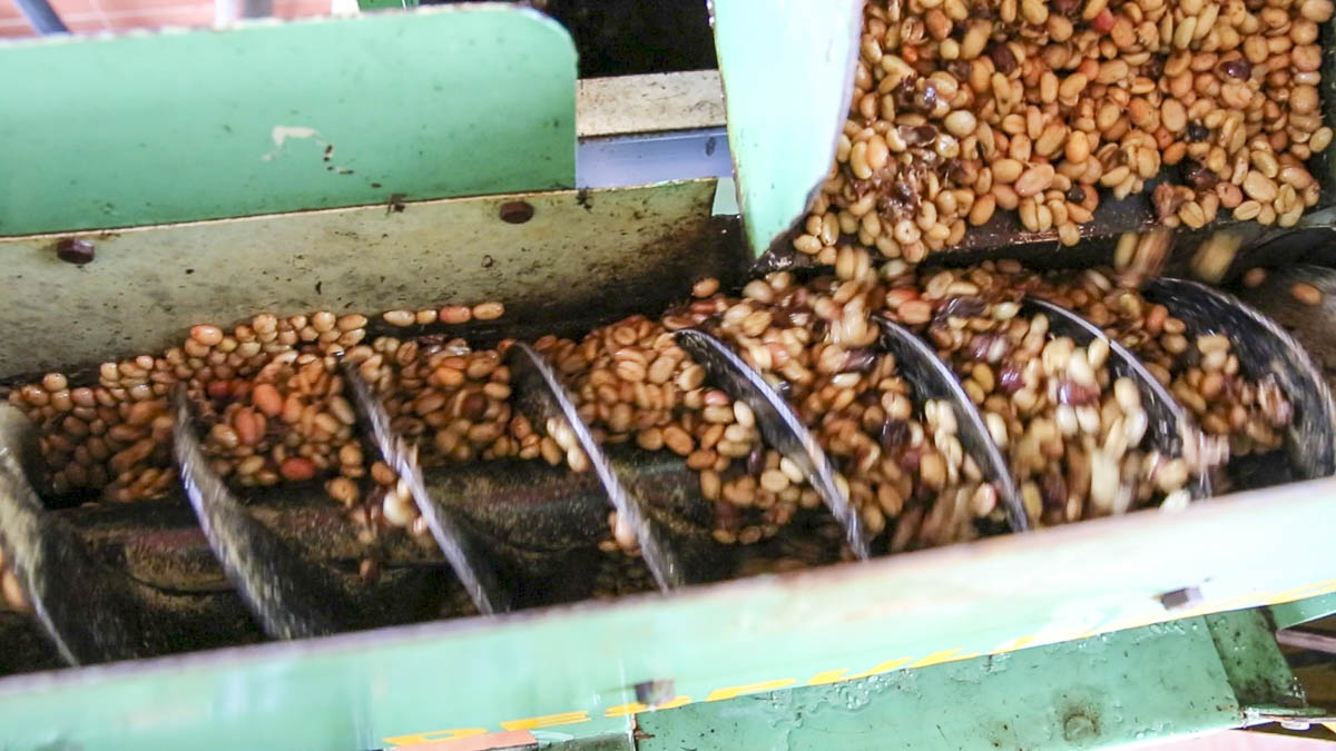 Способы обработки кофе: мытый, сухой, хани | все о кофе
