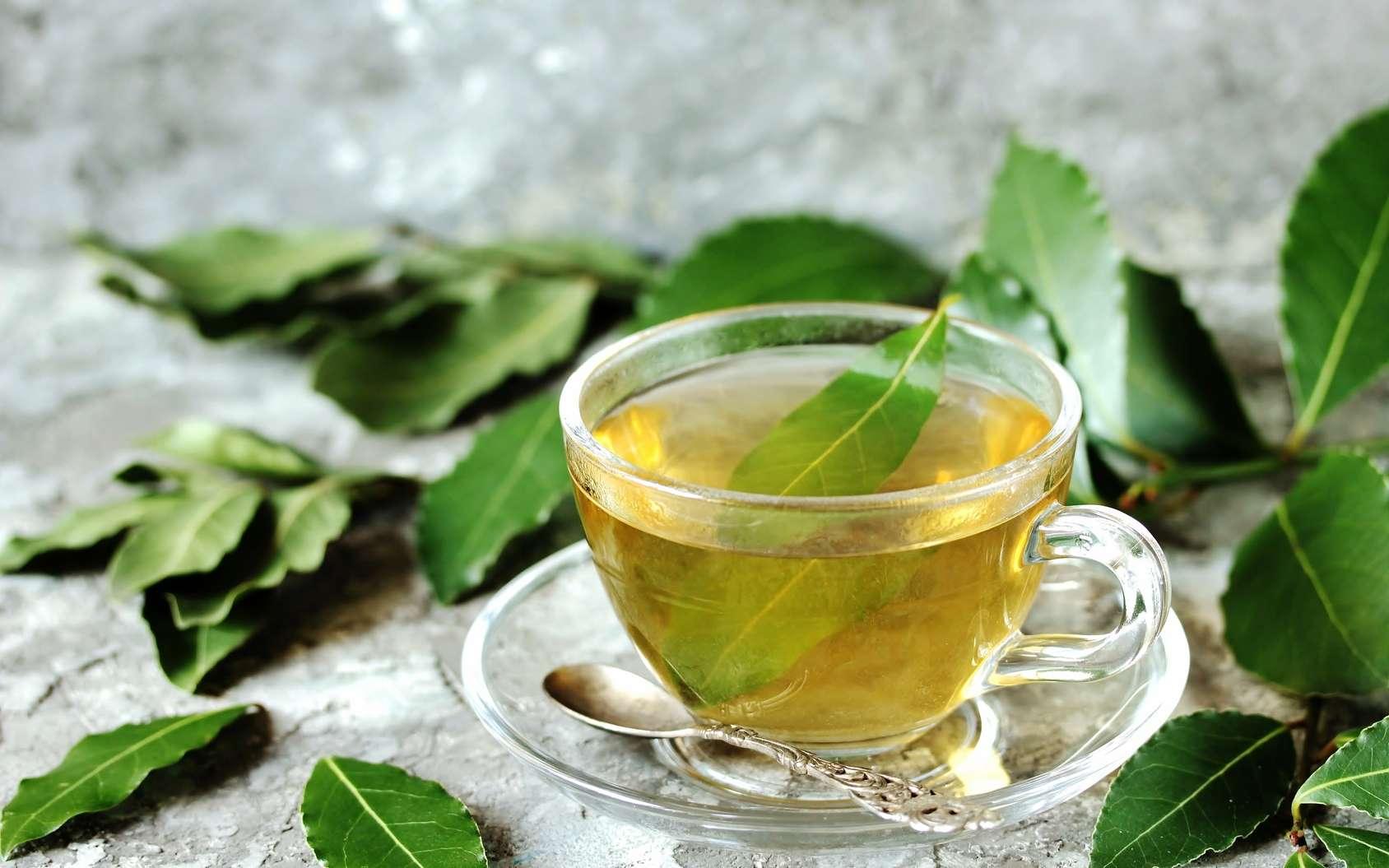 Чай из березовых листьев: польза и вред | польза и вред