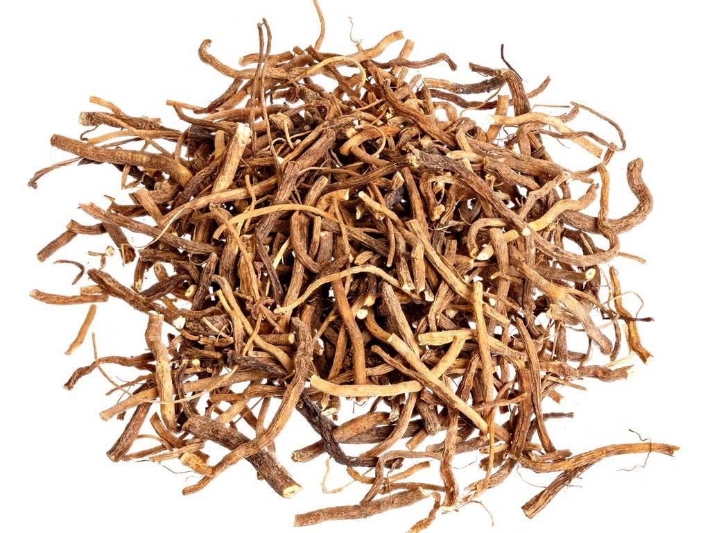 Корневище и корни валерианы, как лекарственное сырье, их лечебные свойства и противопоказания