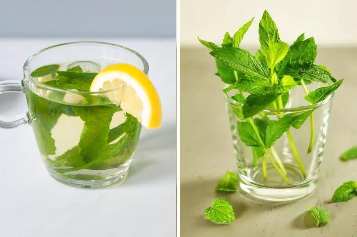 В чем польза или вред чая с мятой для женщин? целебные рецепты