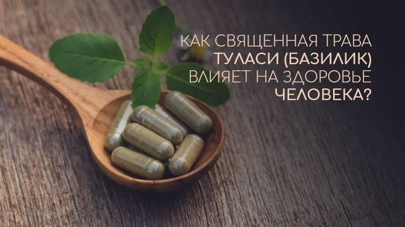 Чай с базиликом: можно ли заваривать базилик и добавлять его в чай, польза и вред базиликового чая, как правильно заварить с малиной, мятой и другими добавками