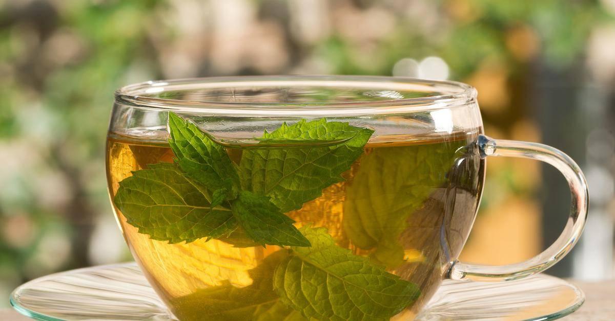 Чай из анисовых семян: рецепты и полезные свойства