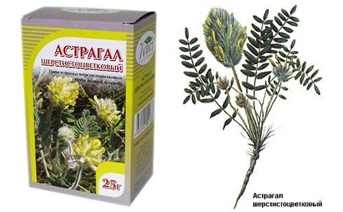 """Астрагал: трава жизни, секреты лечения. драже """"астрагал"""" - описание и инструкция по применению"""