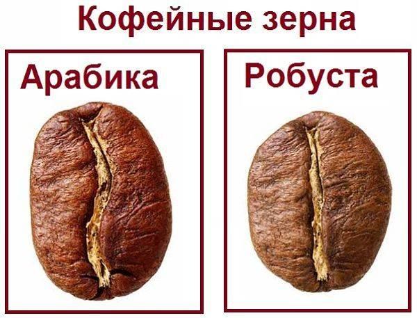 Ассортимент кофе и виды