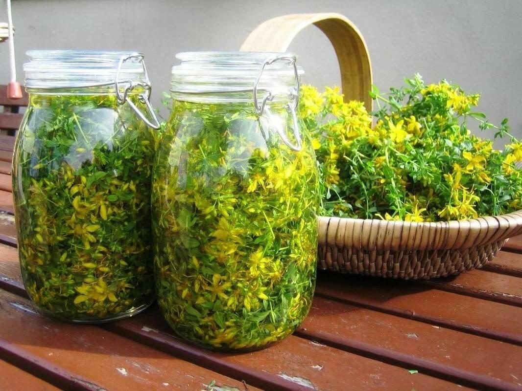 Какие травы можно собирать для чая и когда. какие травы для чая собирать   здоровое питание