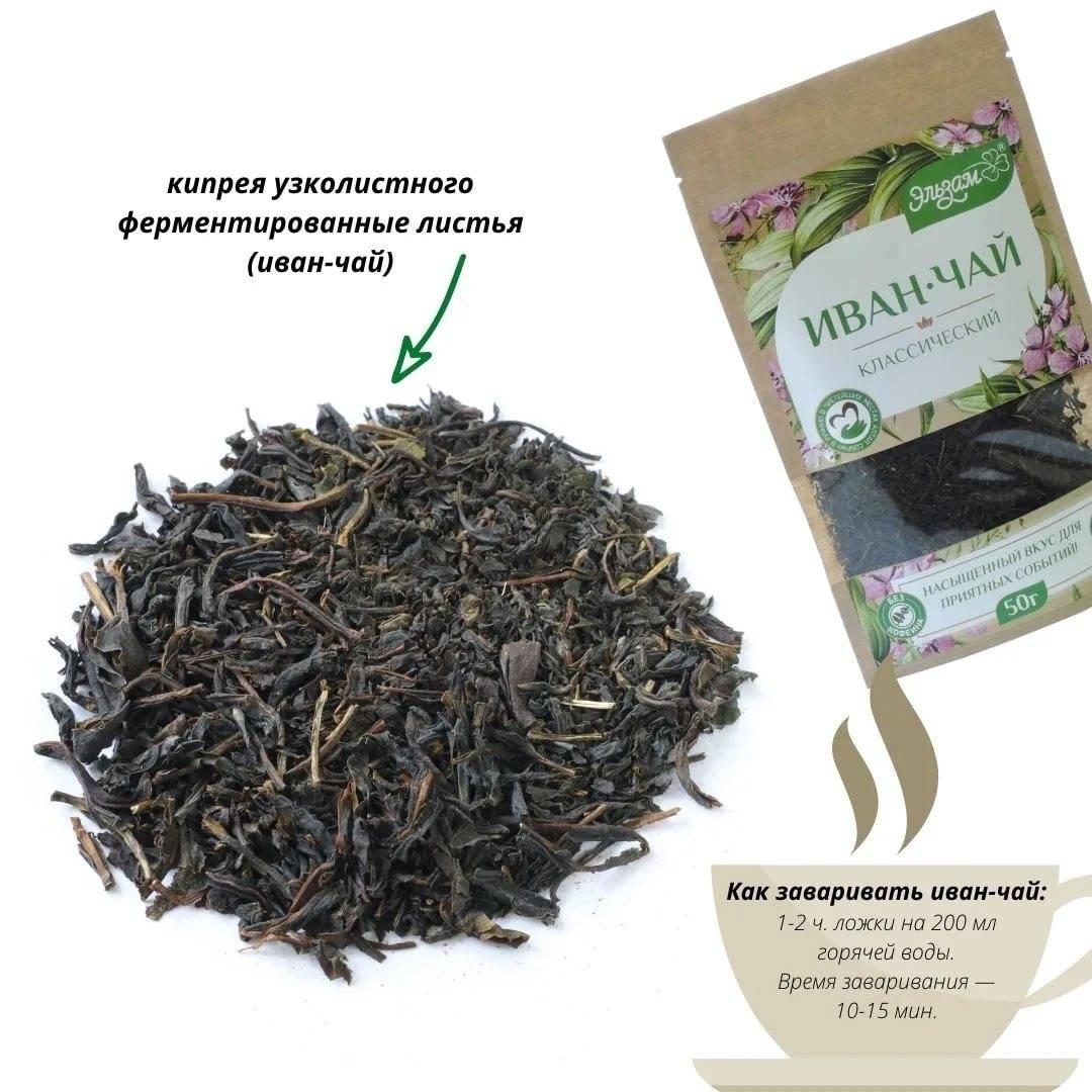 Иван-чай (копорский): сбор, способ приготовления, ферментация, хранение; в чем польза иван-чая (кипрея) для здоровья