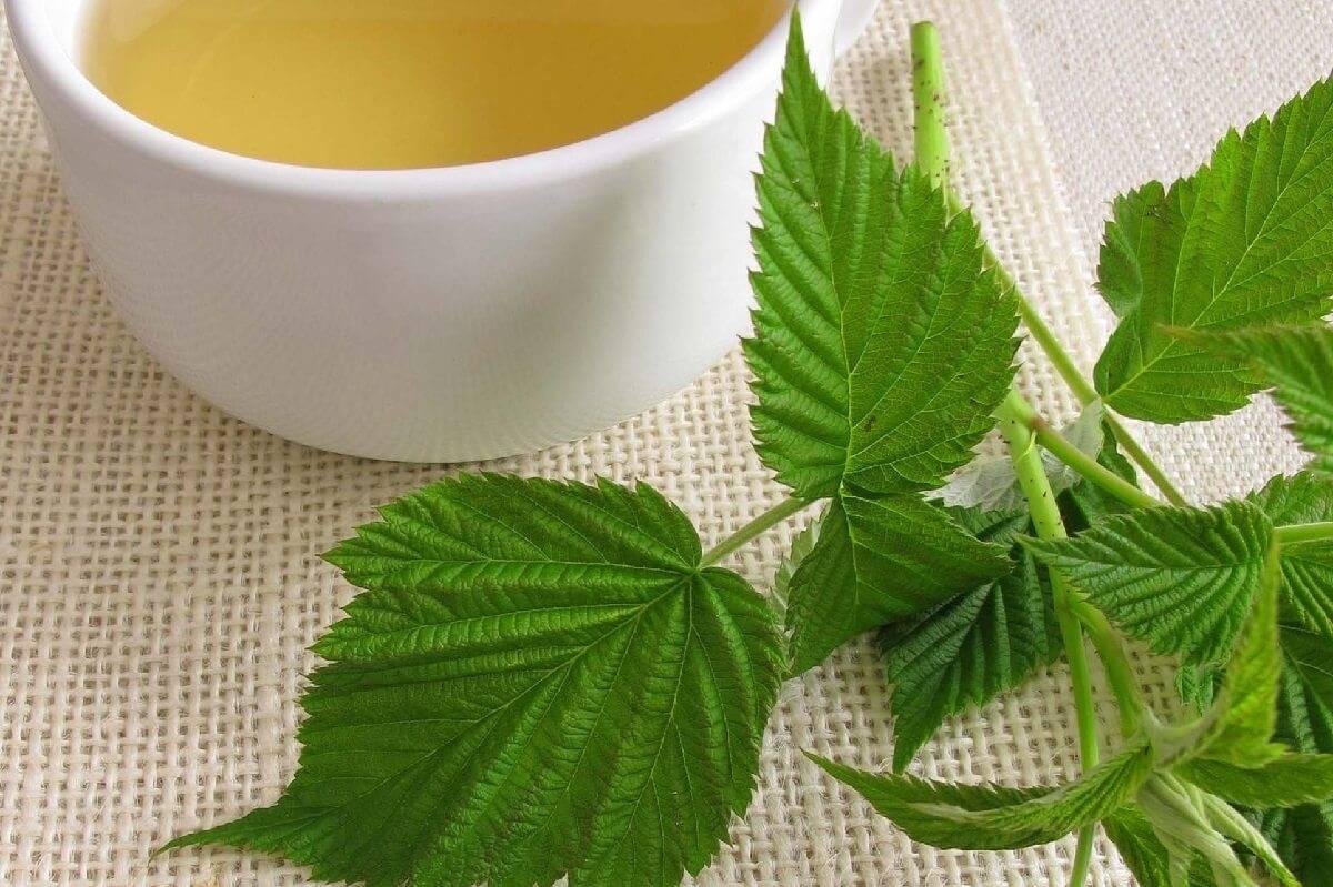 Чем полезен чай из листьев малины – готовим витаминный напиток!