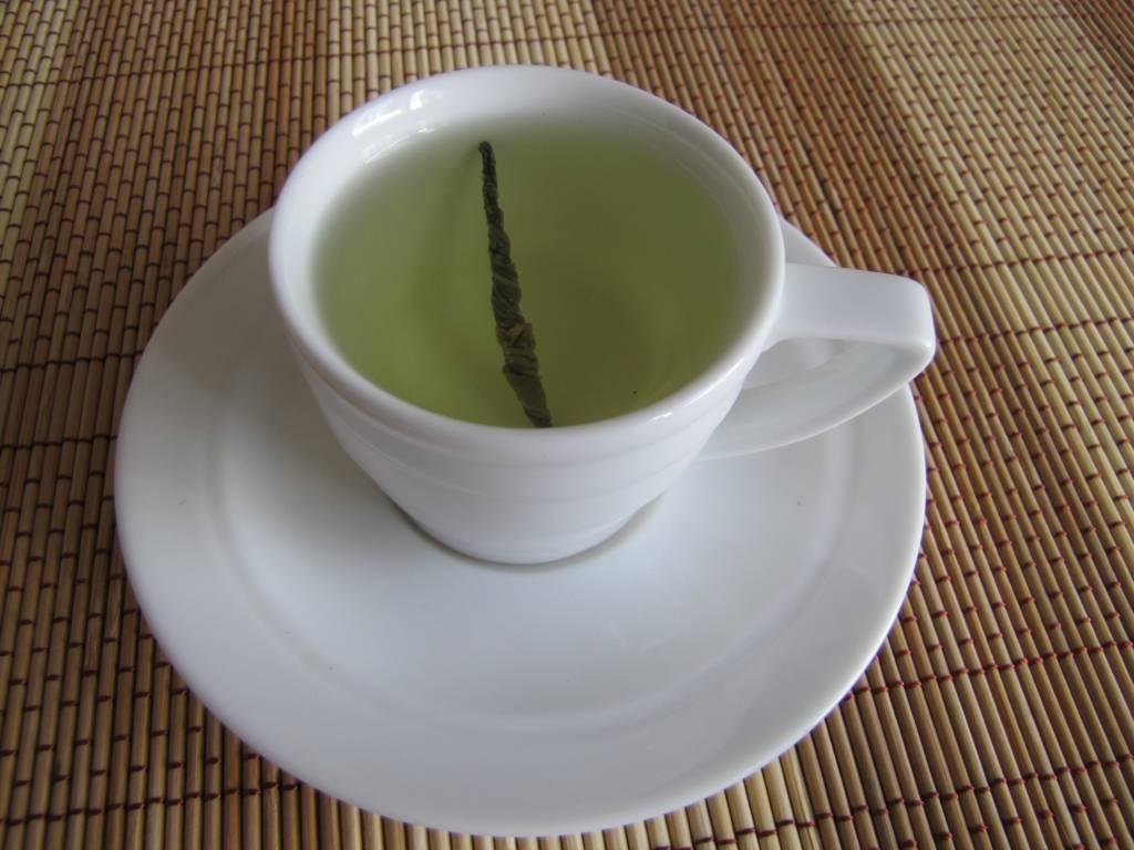 Природный лекарь – кудин чай