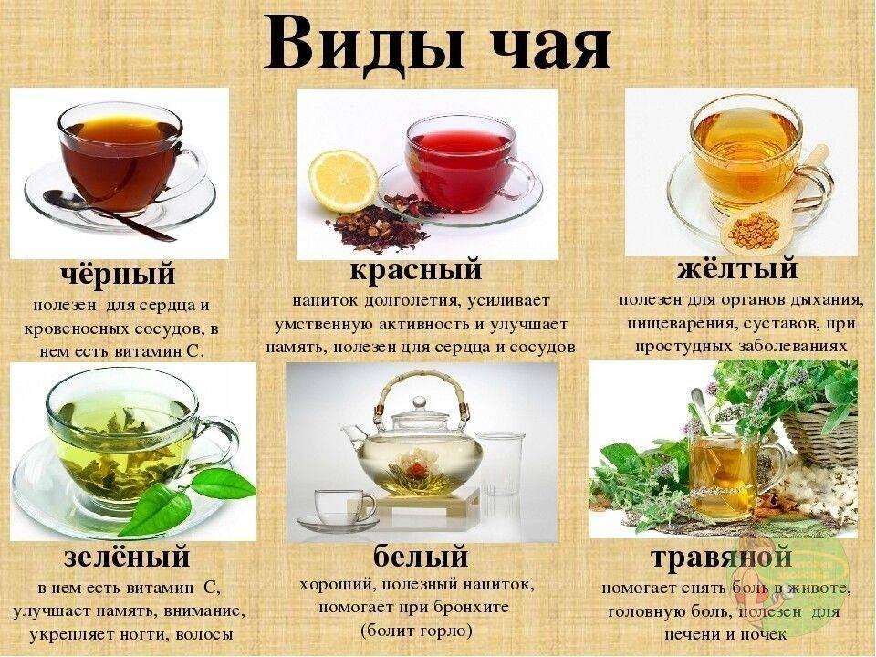 Какой сорт чая самый полезный: белый, зеленый, черный