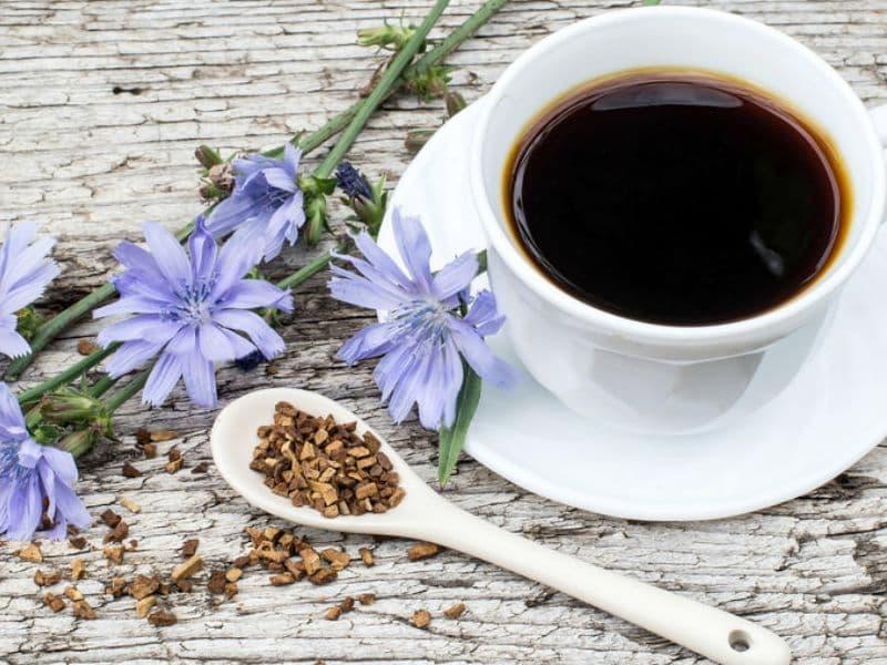 Цикорий как заменитель кофе: растворимый и молотый, польза и вред