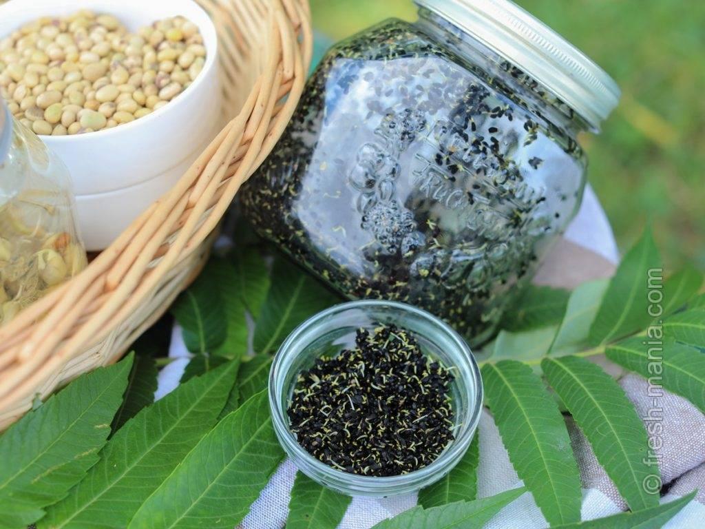 Черный тмин - применение в медицине и рецепты