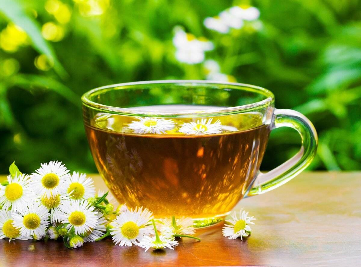 Как правильно пить ромашковый чай. рецепты чая из ромашки | блог о красоте и здоровье