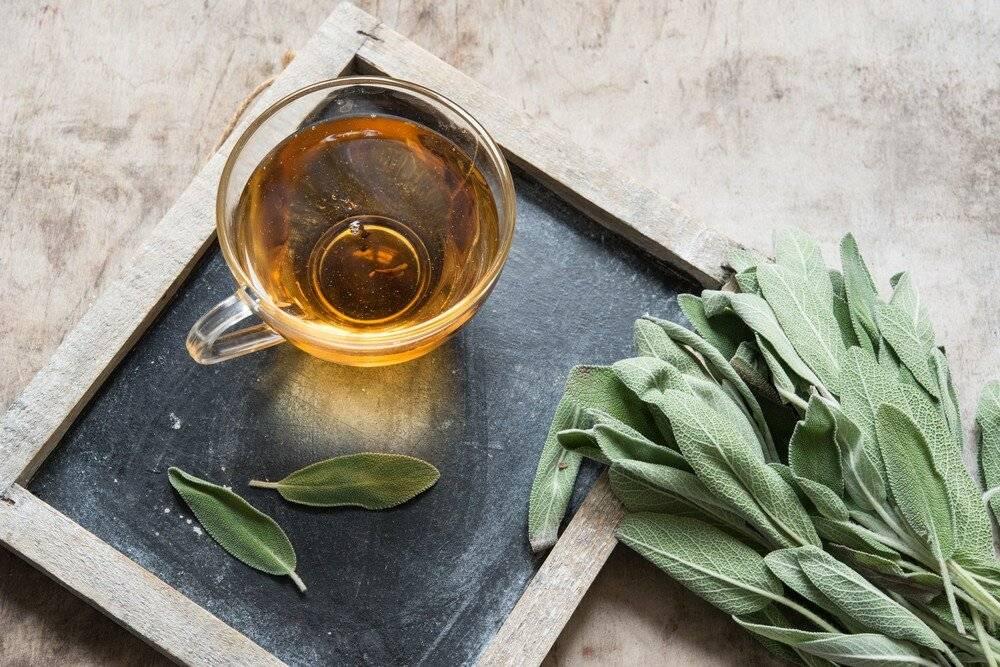 Шалфей можно ли пить как чай