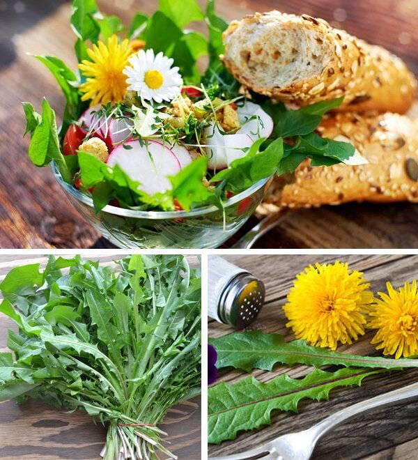 Как приготовить чай из одуванчиков, полезные свойства цветов, листьев и корней, отзывы