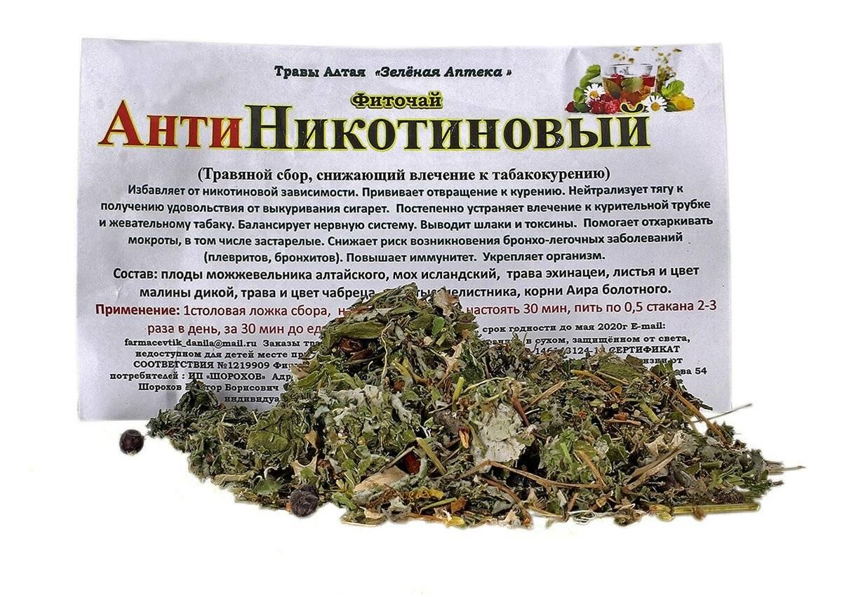 Чай из душицы - рецепты заваривания и польза - целебные травы