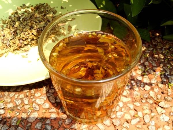 Тулси или чай из священного базилика — полезные свойства и применение