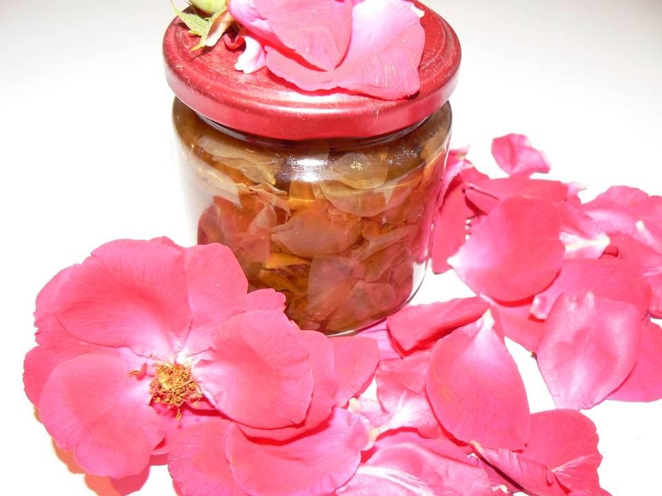 Чай из лепестков пиона: польза и вред, рецепты, противопоказания