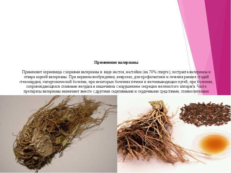 Заготовка лекарственных растений: учимся правильно собирать, сушить и хранить