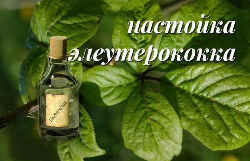 Экстракт элеутерококка жидкий: показания, особенности применения, рецепты