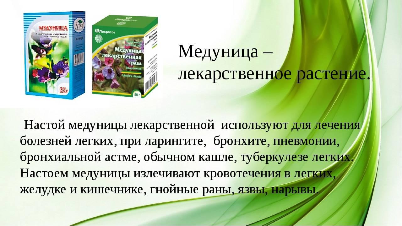 Медуница лекарственная
