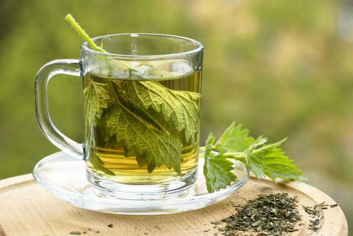 Мелисса: полезные свойства и противопоказания для женщин. чай с мелиссой: польза и вред для здоровья