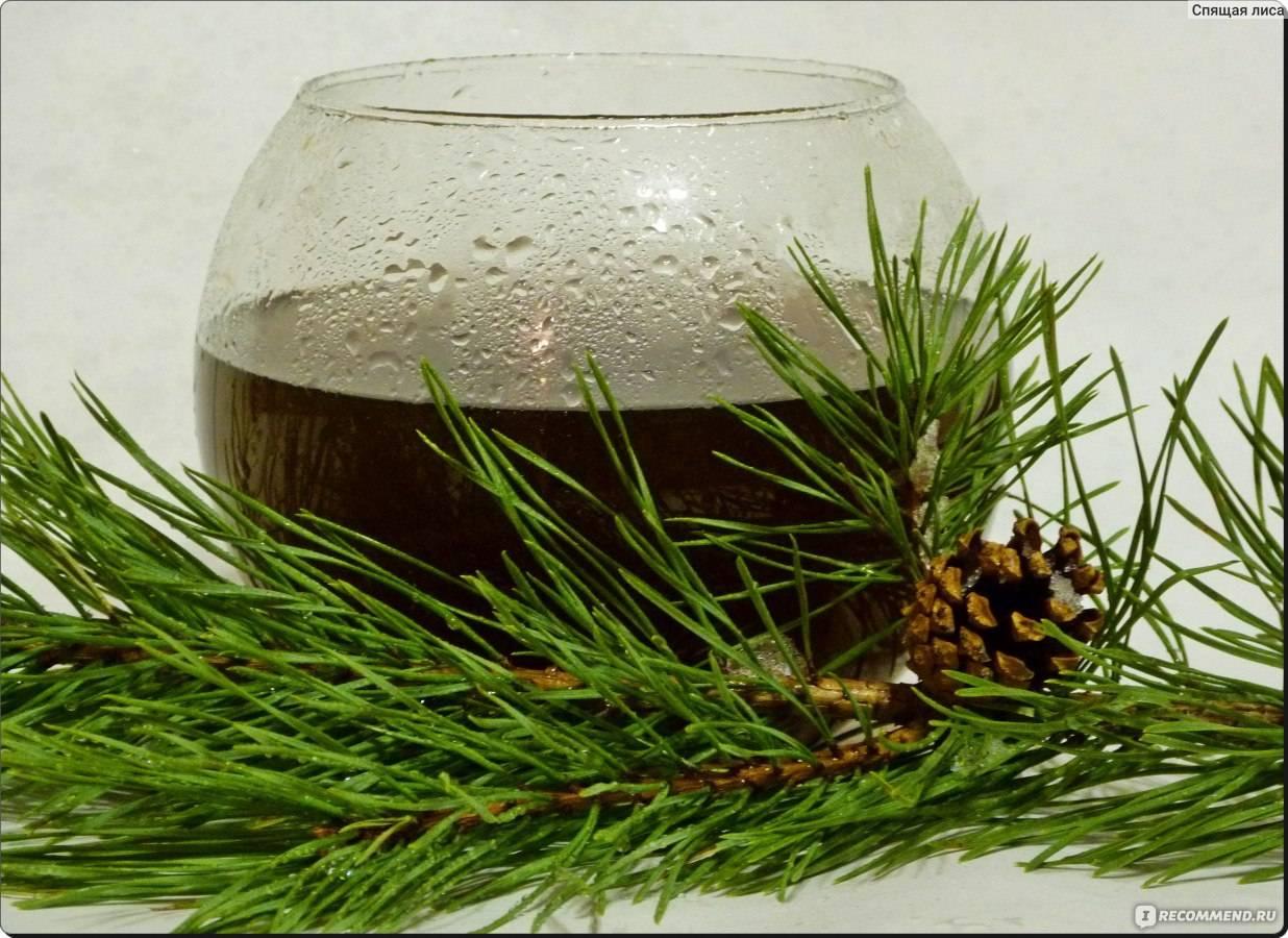 Хвойный чай и его свойства, рецепты приготовления