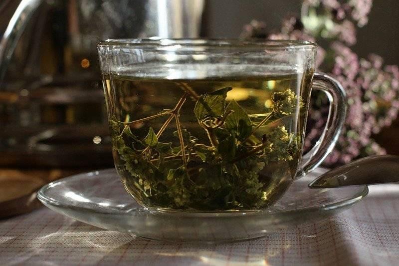 Чай сенна - полезные свойства. как заваривать траву