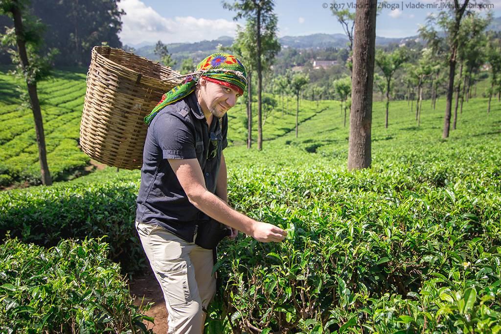 Секреты идеального чаепития или все об индийском чае — staff-online