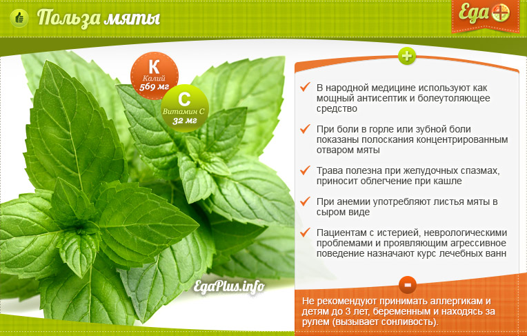 Чай с мятой польза и вред для мужчин