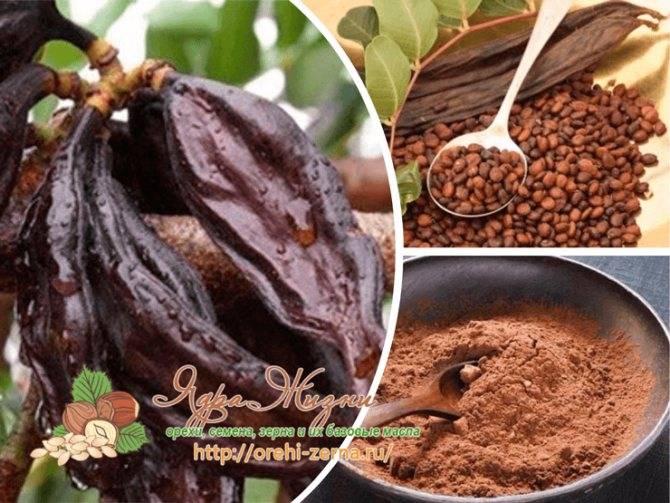 Плоды рожкового дерева — кэроб: расскажем все о пользе и вреде продукта для организма человека