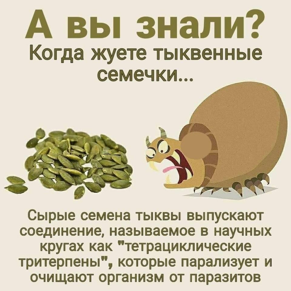 Тыквенные семечки – применение, показание и дозировка