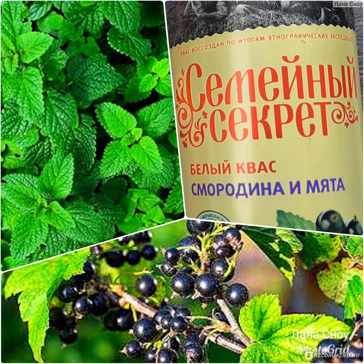 Квас из черной смородины пошаговый рецепт